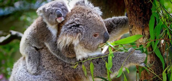 Wissenswertes über Australien